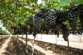 CNA e FAO encerram série de lives sobre o consumo de frutas e hortaliças no Brasil