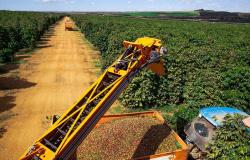 CNA: Ajustes na linha do Funcafé para recuperação de lavouras danificadas por geadas ajudará na retomada da cafeicultura