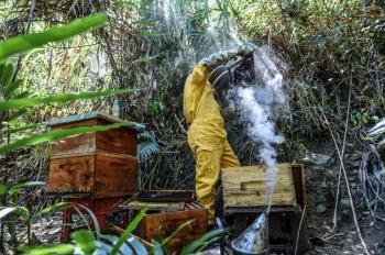 © JOAQUIN SARMIENTO Abelha envenenada agoniza cercada de outras abelhas mortas em uma colmeia envenenada em Santa Fé de Antioquia, departamento de Antioquia, Colômbia, em 31 de janeiro de 2021