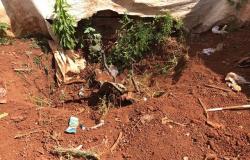 Corpo encontrado em quintal é de vítima de feminicídio; namorado é procurado pelo crime