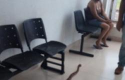 Menino de 4 anos é picado por serpente venenosa e, às pressas, levado ao hospital