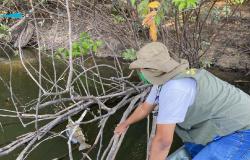 Após denúncia, Sema vistoria rio, encontra peixes mortos e coleta amostras