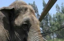 Sema-MT diz que licença para santuário de elefante está em fase final