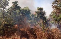 Governo anuncia calendário de alerta para queimadas em MT