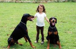 Conheça a personalidade de 7 raças famosas de cães de guarda