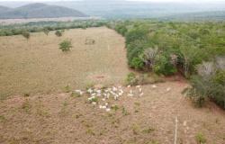 Polícia Civil prende cinco suspeitos de integrar quadrilha de roubo de gado