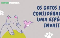As 40 maiores curiosidades sobre gatos que você vai amar saber!