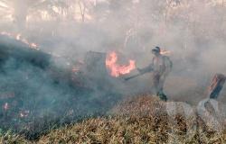 PERÍODO PROIBITIVO – Regional  atende mais de 60 ocorrências de incêndio em uma semana