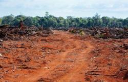 Quatro dos 5 maiores desmatadores da Amazônia estão em MT