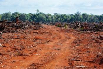 """Reportagem aponta a região de Paranatinga como o """"epicentro da destruição da Amazônia"""""""