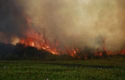 30 dias de fogo: incêndio no Pantanal já queimou 380 mil hectares de vegetação