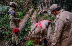 Estado aplica R$ 107 milhões em multas por desmate e exploração florestal com uso de fogo