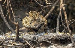 Pantanal tem mês de setembro com mais focos de queimadas na história