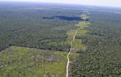 Desmatamento na Amazônia é conto do vigário em escala planetária