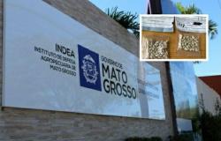 Mato-grossenses recebem pacotes com sementes da China e Indea alerta sobre perigos