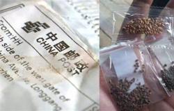 INDEA: MT tem ao menos 10 relatos de sementes suspeitas enviadas da Ásia; Um caso em Santo Afonso
