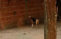 Suspeito de espancar cadela da família é preso em Nova Olímpia com base na nova lei federal sem direito a fiança