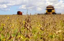 Produção de soja deve aumentar quase 66% até 2030 em MT, diz Imea