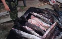 PM intercepta motorista e apreende 200 quilos de pescado em Jangada