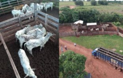 PM recupera 34 cabeças de gado furtadas