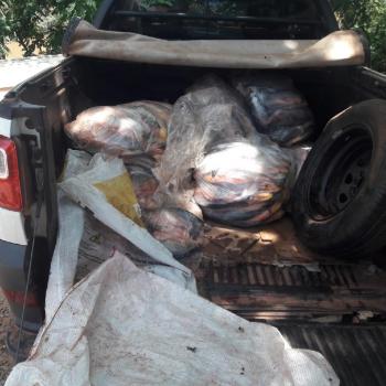 Policiais militares apreendem 126 quilos de pescado irregular em Porto Estrela