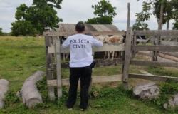 Funcionário é preso por ajudar roubar gado de fazenda em MT