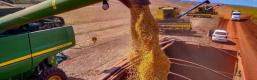 Duas pessoas envolvidas em esquema de desvio de cargas de soja são presas em flagrante