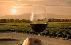 Cabernet sauvignon, merlot, pinot noir: como escolher um vinho?