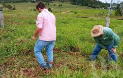 UNEMAT é parceira na produção de biopesticida para braquiária