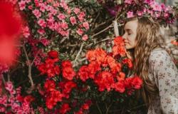 5 Plantas que vão deixar sua casa mais feliz