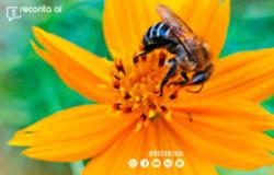 Abelhas, morcegos e moscas geram R$ 43 bilhões em riquezas agrícolas no Brasil