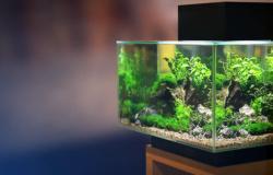 Aquário para peixe betta: 5 dicas para escolher o seu!