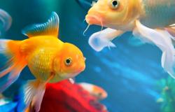 Como montar um aquário: confira 7 dicas