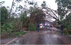 Chuva causa estragos e interdita via que liga Campo Novo a Tangará