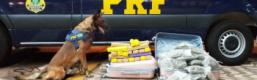 PRF prende jovem transportando maconha e skunk dentro de ônibus