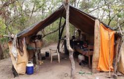 FISCALIZAÇÃO-MP resgata 11 trabalhadores em situação de escravidão em MT