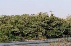 Vídeo mostra canoeiro salvando banhista no Rio Cuiabá