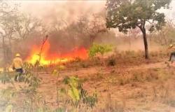 Mata no complexo indígena Umutina incendeia há quase uma semana no município de Barra do Bugres