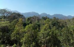 Operação contra desmatamento aplica R$ 55,5 milhões em multas