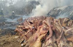 Bombeiros militares combatem incêndio em caminhão com carga de carne