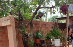 Homem é preso por cultivar maconha no Distrito de Progresso