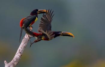 BELEZA DE MT: Cenas inéditas da floresta Cristalino serão exibidas no Animal Planet