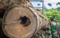 Ibama aplicou mais de R$ 45 milhões em multa por exploração florestal e transporte de madeira ilegal no Mato Grosso