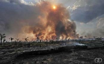 DESMATE - Áreas da Amazônia em Mato Grosso já 'desapareceram'