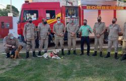 Trabalhos de busca, resgate e salvamento com cães do Corpo de Bombeiros Militar de MT é referência no país