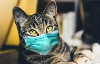 Pesquisa do IFMT Alta Floresta aponta que gatos podem transmitir covid-19 para companheiros da mesma espécie