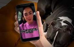 Após segunda morte de cachorro, Latam suspende transporte de pets
