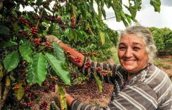 Programa da ONU investirá R$ 3 milhões em projetos sustentáveis em MT