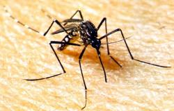 Casos de dengue já são quase 26 mil em Mato Grosso
