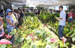 Visita técnica mostra resultados de pesquisa sobre flores tropicais